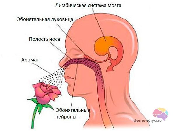 Потеря обоняния при болезни Паркинсона
